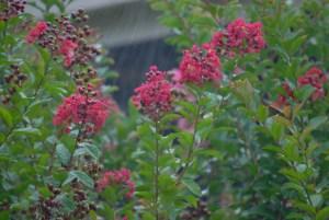 Kauai rain flowers
