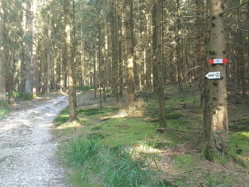 Kobernaußerwald UWW4