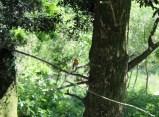 Bird 10
