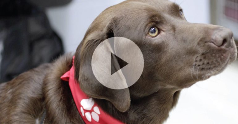 Why can dogs hear a dog whistle but people can't ...