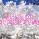 2019年駒沢公園の桜の見頃はいつ?開花状況と人気のうま公園の場所も調査!