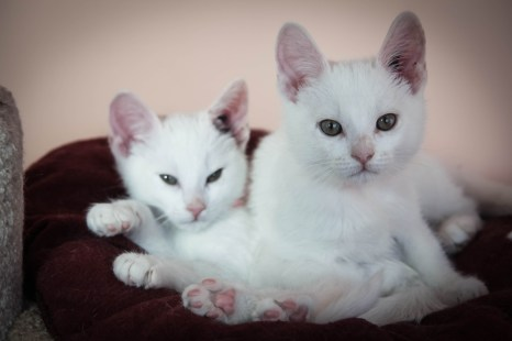 Lenny and Tiny are 11-week-old neutered males looking for a forever home. They were found together with a mother and sis- ter cat in a box near a church in Morinville. Can you help these two cuties find a loving home. Give us a call or come in. Call the Morinville Vet clinic at 780.933.3133.