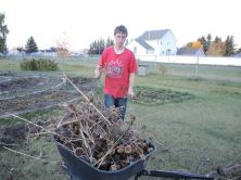 On Tuesday night volunteers and members of the Morinville Centennial Community Gardens Society (MCCGS) gathered at Champlain Heights Park and started preparing the public areas of the gardens and tool shed for the winter.