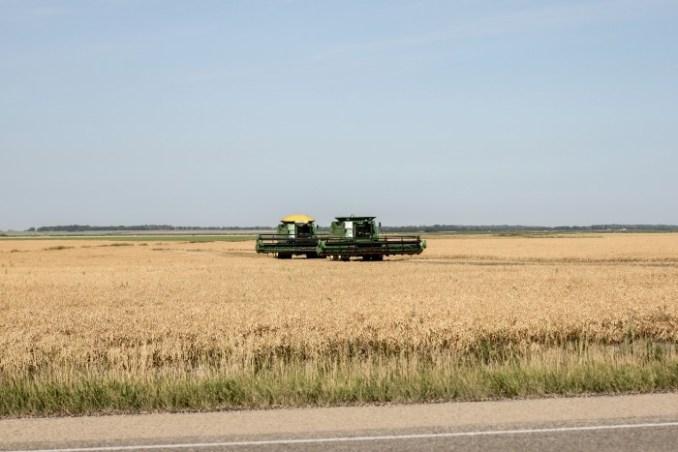 crops-2