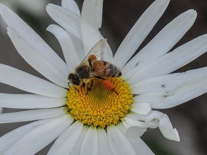web-bee