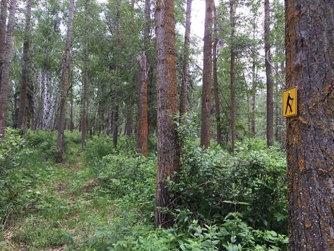 web-Boisverts GreenWoods trails - EALT