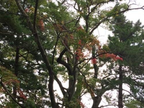 盛岡城跡公園紅葉情報10.5二ノ丸2