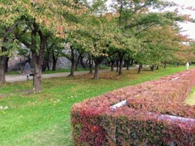 盛岡城跡公園本丸3紅葉