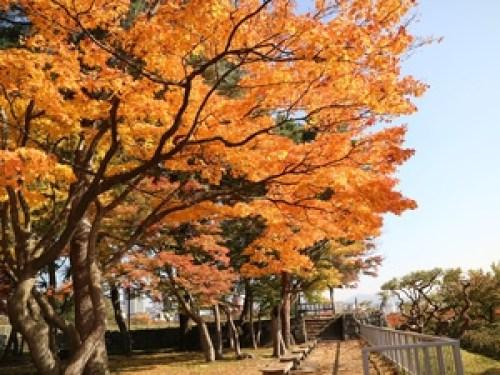 盛岡城跡公園の紅葉2