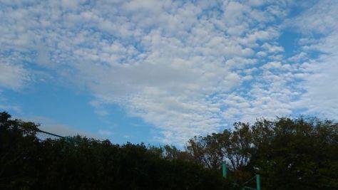 秋分を過ぎ寒露の頃には、本当に空が高くなります。空にも季節感があるようです。