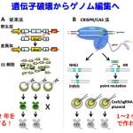 遺伝子組換え、ゲノム編集、ヒトゲノム