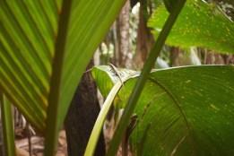 Seychelles - Impressions - 9