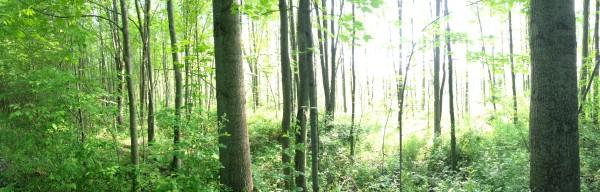 world-wanderlust-sacred-grove