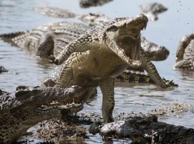 Sharon Eubank's post about Kenyan crocodiles and being spiritually safe