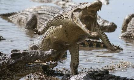 Sharon Eubank's post about Kenyan crocodiles and being spiritually safe