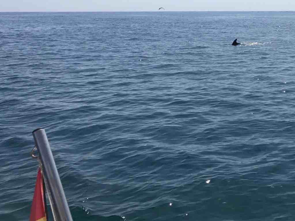 Omringet af delfiner - wauwwww!!