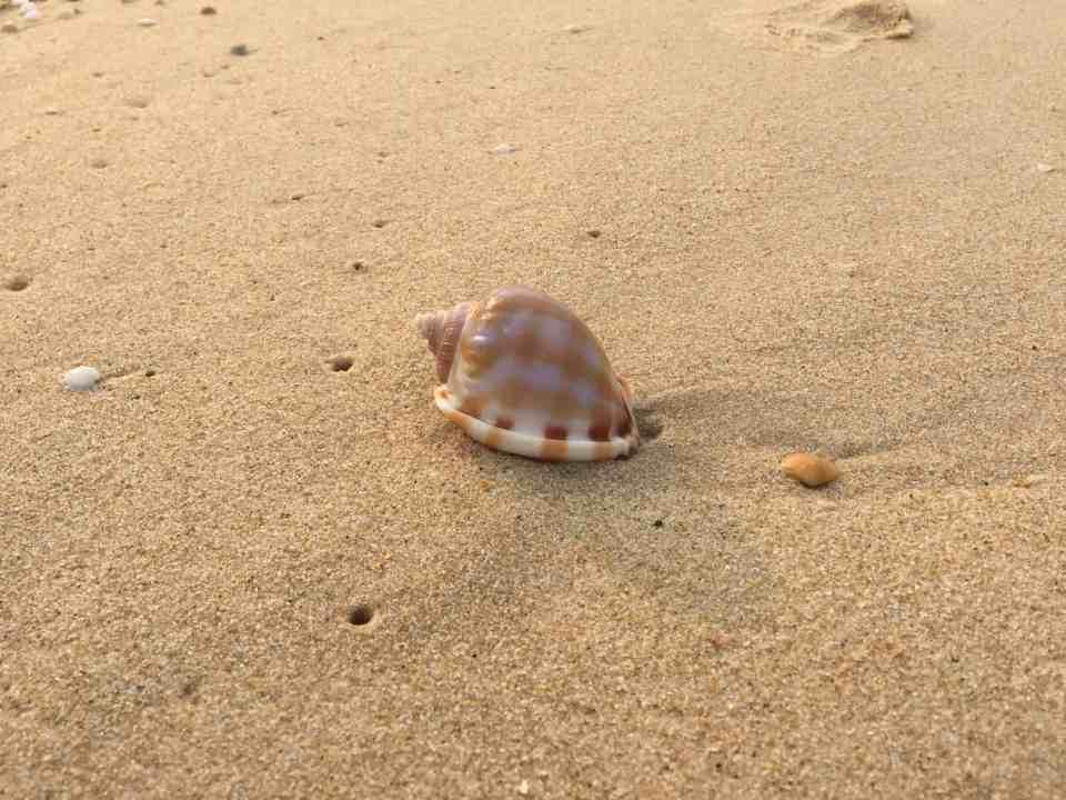 Vi nåede en hurtig gåtur på stranden inden middagen