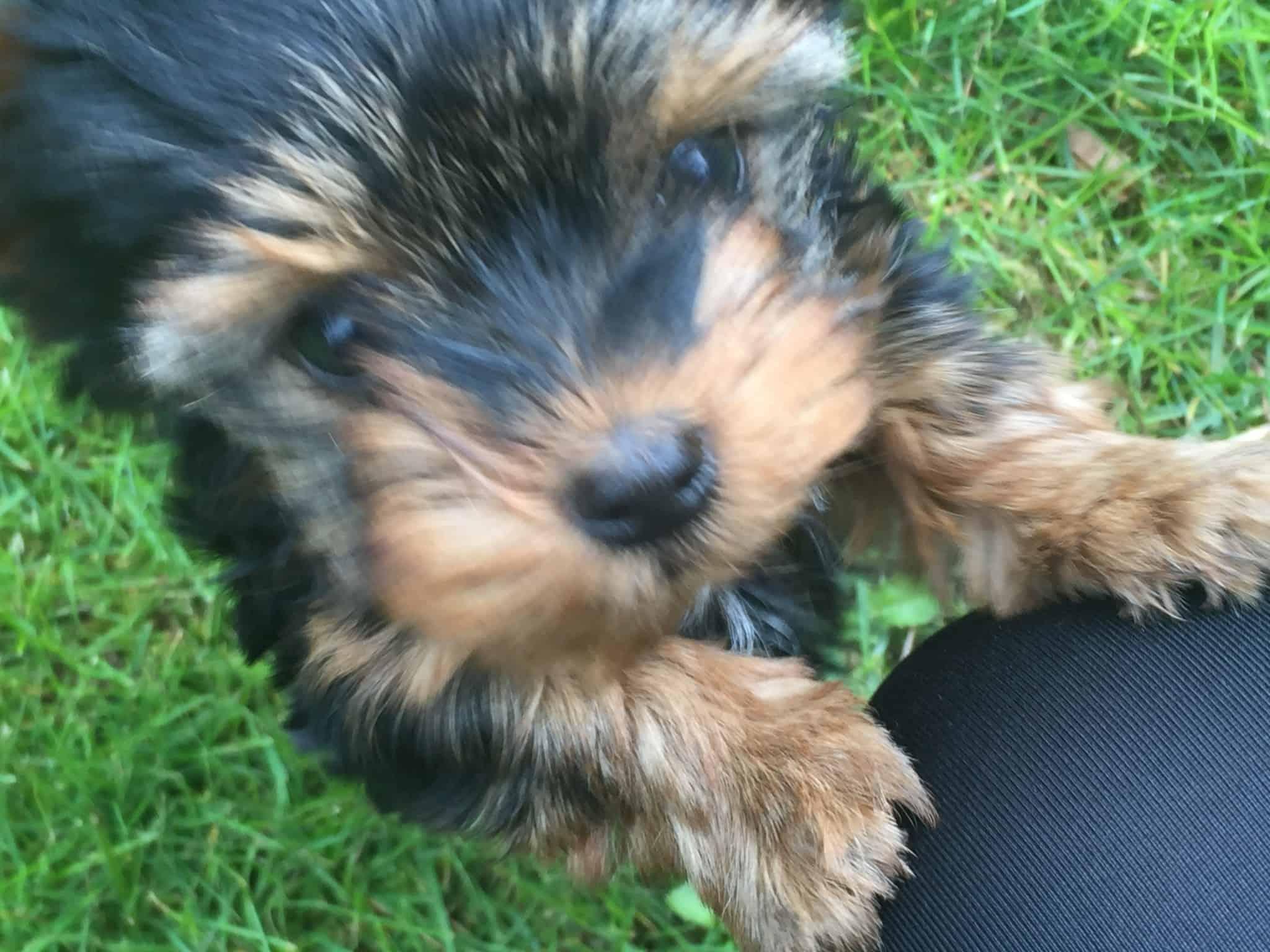 Vi har fået et nyt familiemedlem - Skibshunden Bobo!