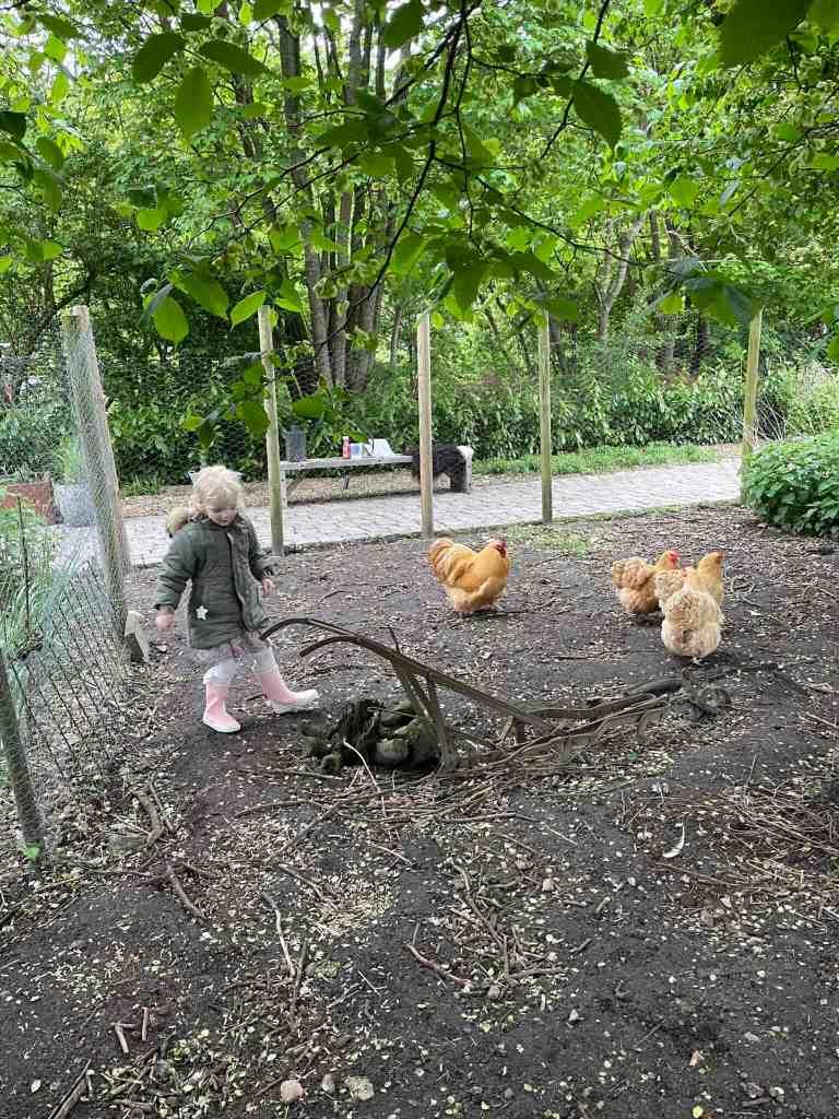 Leonora elsker at fodre hønsene