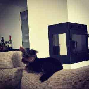 Søndag på sofaen - helt nyt!
