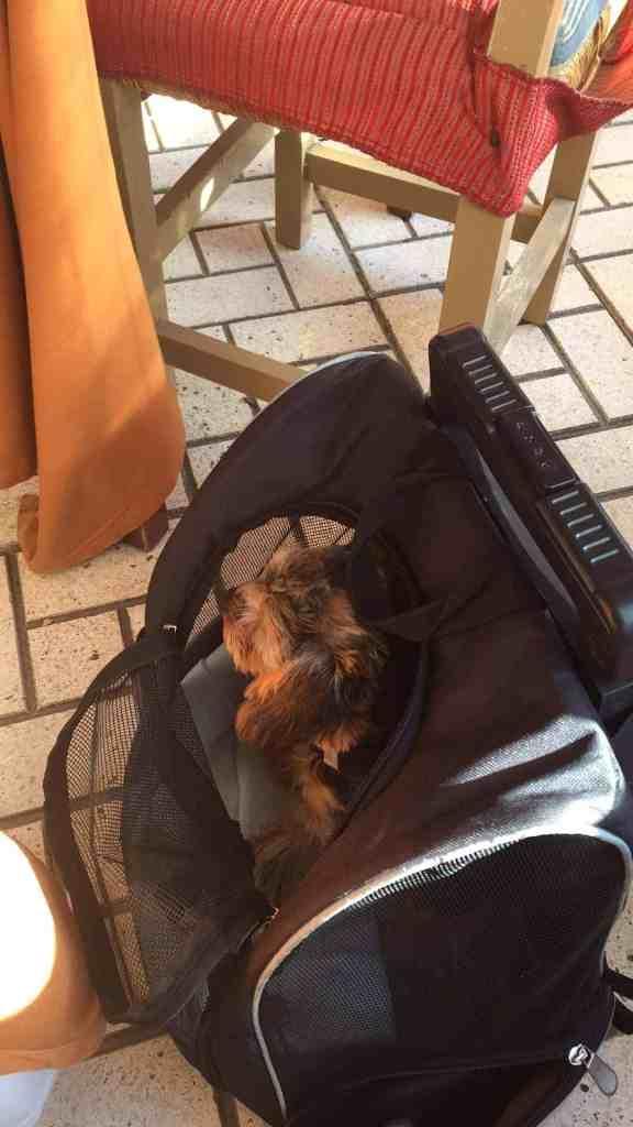 M E G E T spændende frokost i dag og en lækker fyr under en palme!