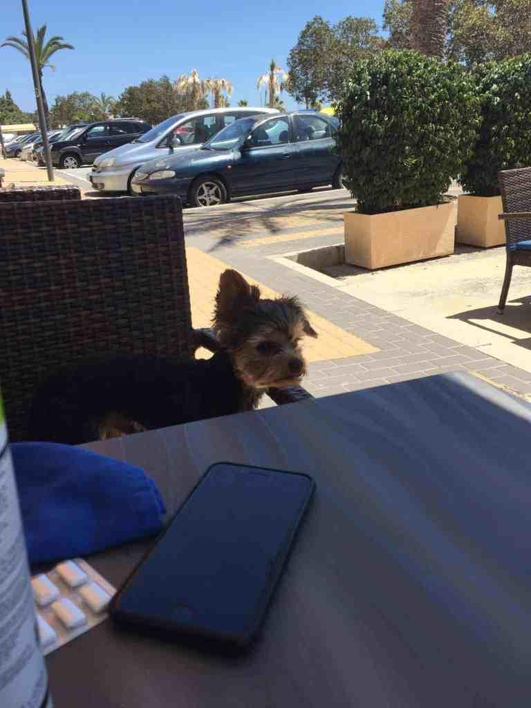 En Skibshunds dagbog - 18.