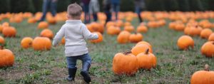 Young Toddler Running Away from Camera Towards Pumpkin Patch