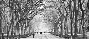 Image of Central Park in December, with snow on ground and trees