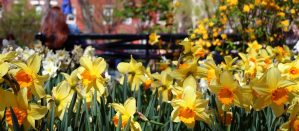 Spring flowers blooming in a City park