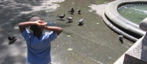 Rear view of child observing pigeons in City Hall Park in NYC