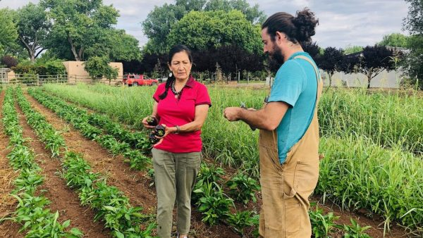 Deb Haaland holding eggplants in hand while speaking with a farmer in the middle of an eggplant field