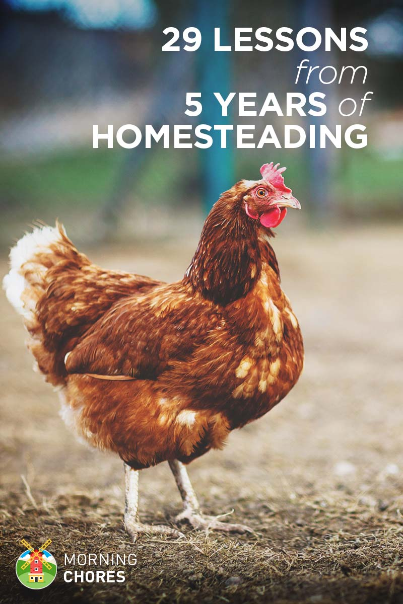 29 Valuable Lessons I've Learned from 5 Years of Homesteading