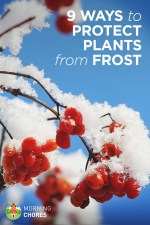 9 Options That Will Help Protect Your Plants from an Unexpected Frost