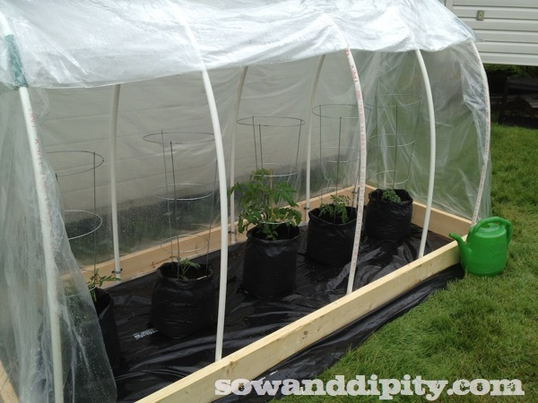 This Greenhouse Costs About $50 To Build. This Is Not A Kit.
