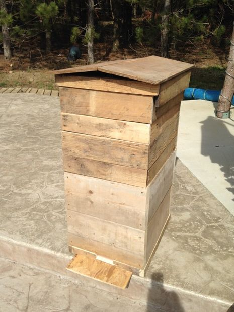 bee hive 5