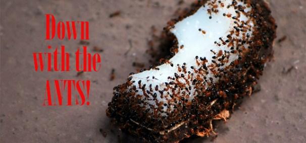 amdro ant killer instructions