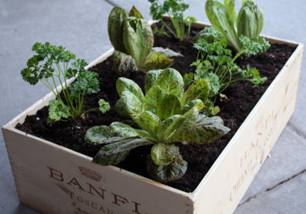 This Person Took An Old Wine Box And Converted It Into A Raised Garden Bed.  It Was A Perfect Size To Fit On Her Balcony As She Likes To Grow Things And  ...