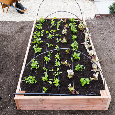 raised-bed-hoops-0416