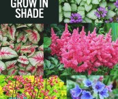 shade loving foliage plants