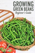 Growing Green Beans: All You Need to Know About Planting Green Beans