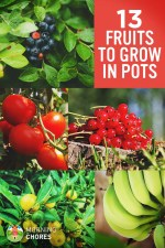 13 Best Fruits and Berries You Can Easily Grow in a Container Garden