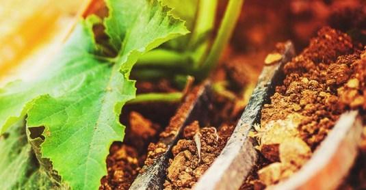 5 Best Garden Fork Reviews (Pitch Forks, Hand Forks, Digging Forks)