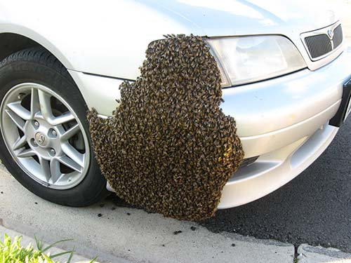 swarm-on-car