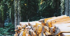 Free Firewood: 4 Options for Finding and Harvesting Your Own Firewood