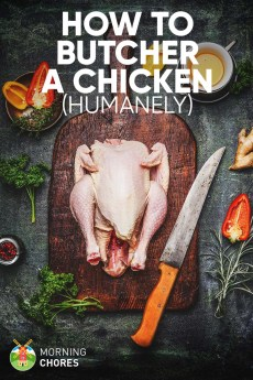 How to Butcher a Chicken Humanely