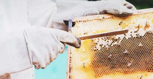 Cleaning Bee Equipment: 6 Tips to Do It Right (and How Often You Should)