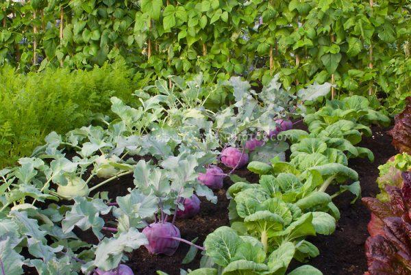 Photo by Garden Photos