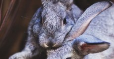10 Common Rabbit Diseases, Illnesses, & Ailments (and How to Treat Them)