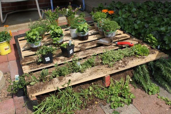 This Pallet Garden Bed Is Shown Being Used On A Patio Which Is A Unique  Idea. All You Have To Do Is Lay The Pallet Out Horizontally, Fill It With  Dirt, ...