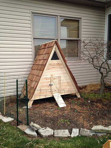 Duck house pictures